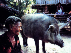 Man Without Pigs (1990)