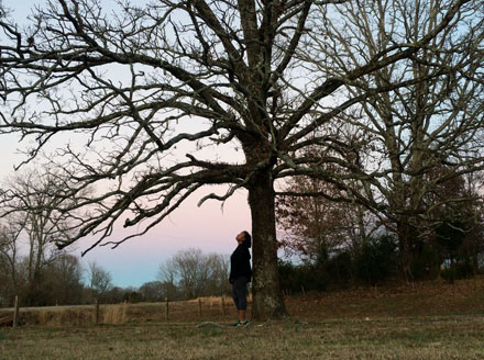 If the Trees Could Talk - Trecia Reavis and Jeff Schmidt