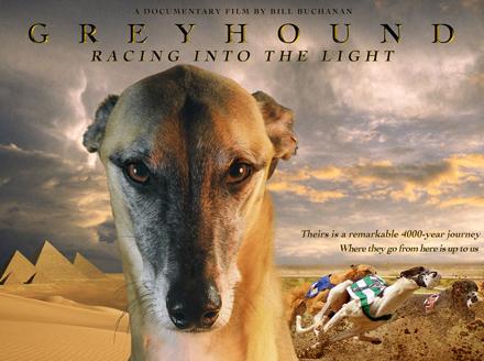 Greyhound - Bill Buchanan
