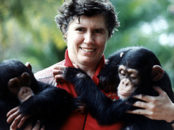 Anne ZellerChimpanzees Today (2001)