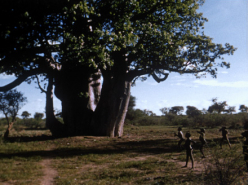 Baobab Play (1974)
