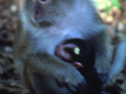 Images From the Field: Baboons (1997)