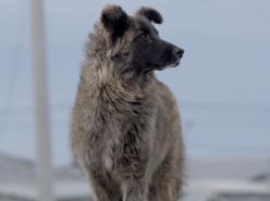 Fireland Dogs (2019)